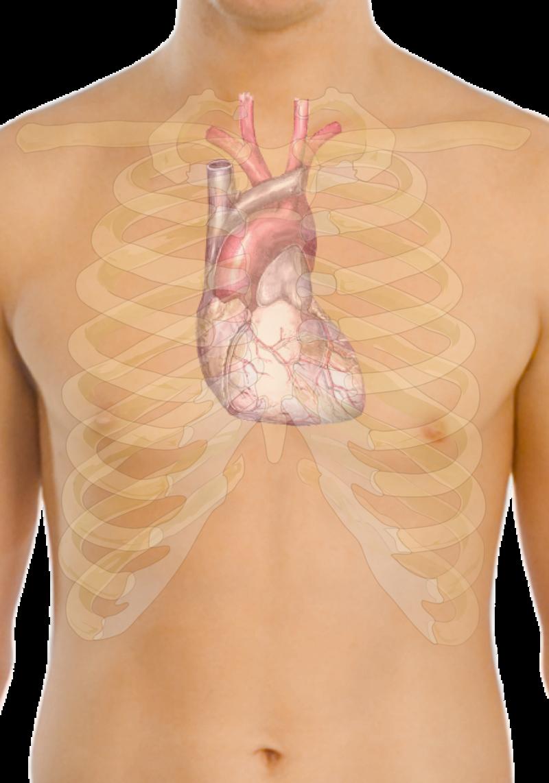 """Boli de inima – hipetensiune arteriala si cardiopatie ischemica, tulburari de ritm cardiac"""
